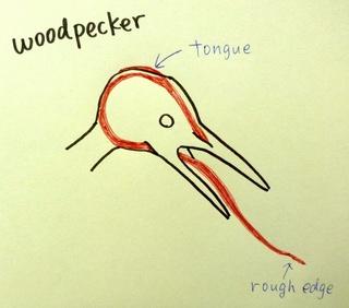 woodpecker tongue.jpg
